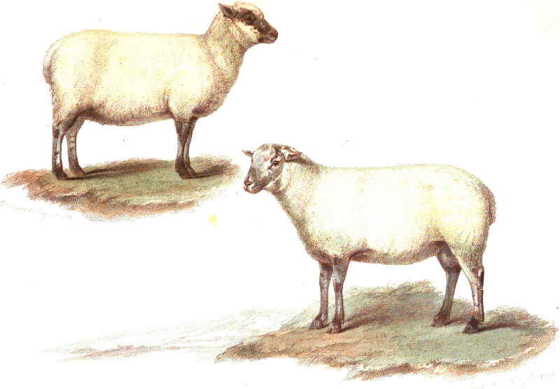 Colour Painting of Southdown 1798